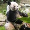 香港島、海の遊園地でパンダを見る