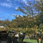 オフコース「秋の気配」を聴きたくなる季節ですね