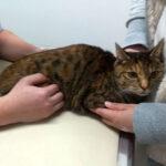 猫に薬を飲ませようと大格闘、右手小指を負傷