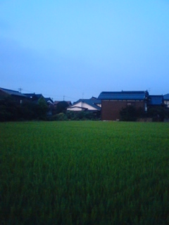 田舎の田んぼ