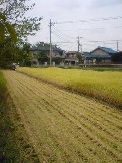 稲刈りの田んぼ