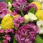 発表会BETAでいただいた花
