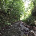 雨上がりの山道