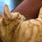 眠るうさぎ猫
