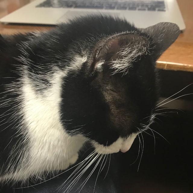 寝落ちする鍵盤ねこ