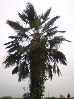 不思議な南国の木