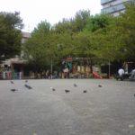 ハトのいる公園