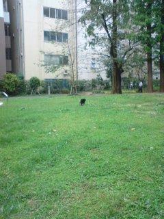 クロネコがいる公園