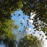 公園から見た空